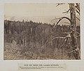 Snow And Timber Line, Laramie Mountains. (8704887275).jpg