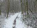 Snow in Colwick Country Park - geograph.org.uk - 1163717.jpg
