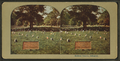 Soldiers' grave, Arlington, from Robert N. Dennis collection of stereoscopic views.png