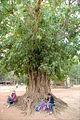 Sous le Banian (Angkor) (6814011728).jpg