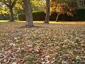 Southwark Park - Image: Southwark Park Autumn Leaves