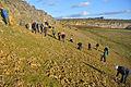 Spaunton Quarry Yorkshire Coralline Oolite Formation.jpg