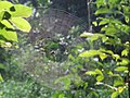 Spiderweb from Kerala 05.jpg