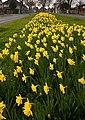 Spring Display IMG 2699 - panoramio.jpg