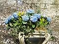 Spring in Central Park - DSC05946.JPG