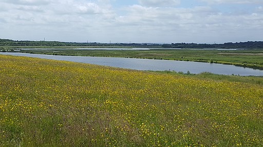 St Aidan's Nature Reserve looking south westish from below the walking dragline