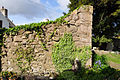 St Tathan's Parish Church wall with ivy and bluebells - geograph.org.uk - 1284330.jpg