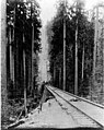 Standard gage track being laid on cable incline, August 3, 1903 (SPWS 160).jpg