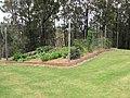 Starr-110621-6309-Solanum melongena-habit vegetable garden-Hawea Pl Olinda-Maui (24801741510).jpg