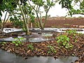 Starr-120620-9736-Jatropha curcas-seedlings in debris near parent plantings-Kula Agriculture Park-Maui (25159146496).jpg