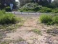 Starr 040125-0068 Chenopodium oahuense.jpg