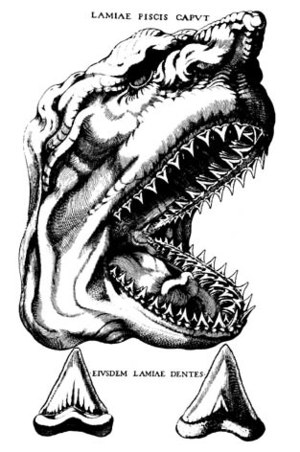 History of paleontology - This illustration from Steno's 1667 paper shows a shark head and its teeth along with a fossil tooth for comparison.