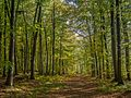 Streitberg-Muggendorf-Wald-114600-PS.jpg