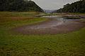 Swamps of Thekkady.jpg