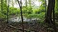 Swampy Woods.jpg