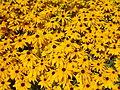 Szent István Park. Flower bed, yellow. - Budapest.JPG