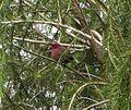 Tanzania 005 - Flickr - gailhampshire.jpg