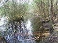 Teich im Wald 3 - panoramio.jpg