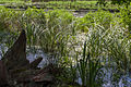 Teich in der Nachtweide.2446.jpg