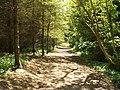 The Clyde Walkway near Cardies Bridge - geograph.org.uk - 1658394.jpg