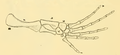 The Osteology of the Reptiles-202 kjhg kijuhb kijh fd ijh.png