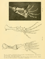 The Osteology of the Reptiles-202 kjhg rty.png