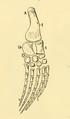 The Osteology of the Reptiles-212 ghyv ghyjjh r5t6.png