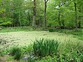 The Pond near Ashridge Monument in May - geograph.org.uk - 1376413.jpg