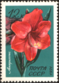 The Soviet Union 1971 CPA 4083 stamp (Amaryllis).png
