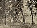 The World's Columbian exposition, Chicago, 1893 (1893) (14593848140).jpg