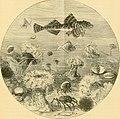 The aquarium (1894) (19739128262).jpg