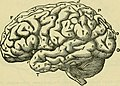 The brain as an organ of mind (1896) (14780823401).jpg