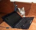 The cat's new interest.jpg
