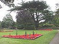 The gardens at Insole Court, Cardiff - geograph.org.uk - 938287.jpg