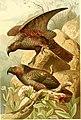 The royal natural history (1893) (14598124109).jpg