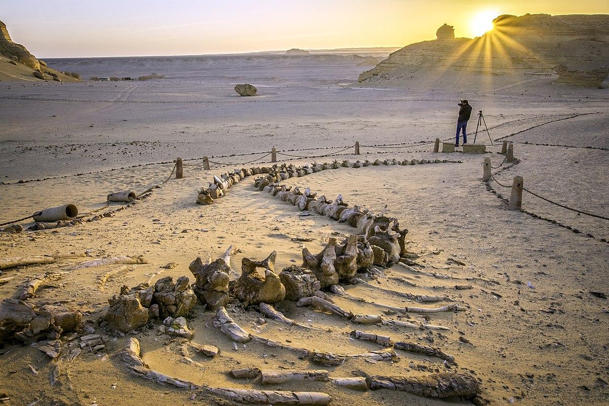 وادي الحيتان في مصر 1200px-The_whales_fossils