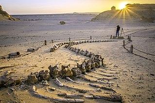 Wadi El Hitan natural monument