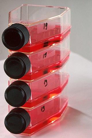 Stamceller odlas ofta i sådana här odlingsflaskor.