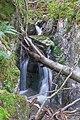 Todtnau - Wasserfallsteig an der oberen Wiese (Hebelweg) Bild 5.jpg