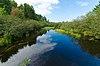 Tomahawk River Pines.jpg