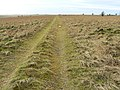 Track towards Little Hill, Salisbury Plain - geograph.org.uk - 656646.jpg