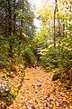 Trail (1538945007).jpg