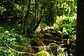 Trail to Aihualama Falls (5170653471).jpg