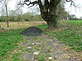Tree and scalpings, north of Radford - geograph.org.uk - 748958.jpg