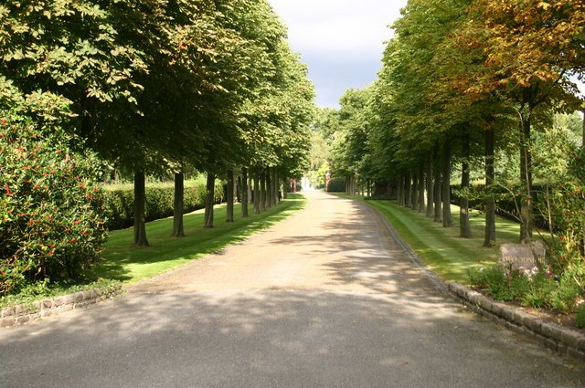 Tree lined drive to Woodside - geograph.org.uk - 555506