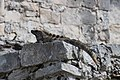 Tulum Ruinas Dec 2015 - Iguanas were everywhere.jpg