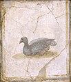 Uccello, affresco Romano di Villa d'Arianna, Stabiae (Museo Archeologico Nazionale di Napoli) - 01.jpg