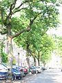 Ulmus glabra Cornuta (amsterdam milletstraat) 030601c.jpg