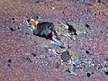 Ultra thin section carbonate sigma clast 1.JPG