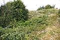 Uncut vegetation for wildlife, Friern Park Trading Estate - geograph.org.uk - 892226.jpg